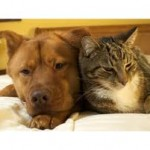 >Loving like cats and dogs…